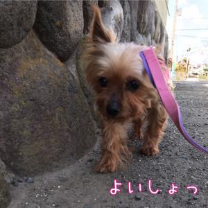 まりんさんお散歩上手!