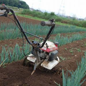 今年は期待してます・・・長ネギの土寄せと追肥