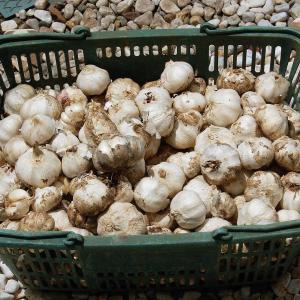 玉葱とニンニクの保存