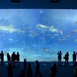 沖縄美ら海水族館、地元民おすすめ穴場の話!割引・アクセス情報も