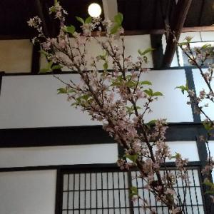 4月4日 夏オープン京町屋カフェ