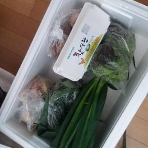 忘れたころにやってきた野菜