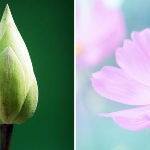 あなただけの花を咲かせましょう。 今日のマヤ暦144