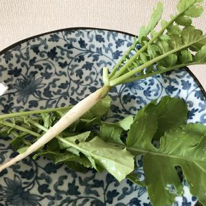 ミニ大根/収穫して食べる