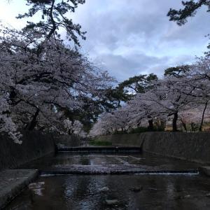 ゆっくり桜を愛でてみると
