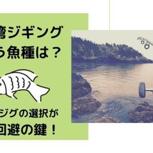 伊勢湾ジギングで狙う魚種は?シーズンごとに変わるヒットジグの選択が坊主回避の鍵!