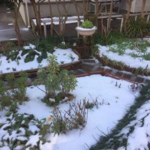クリスマスローズと春の芽吹き