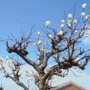 春の花壇と天気予報