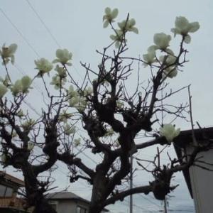 一日で成長する花たちと種まき