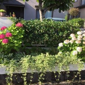 腰痛と荒れた庭