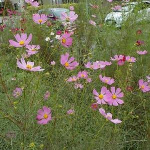 たくましい菜園の花たち