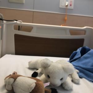 【臍ヘルニア】 入院当日。手術前日。