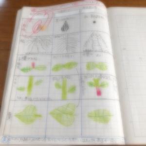 わたしのおすすめ(中学受験を経由する上での勉強方法