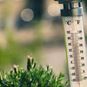 気温の変化による猫の体調管理