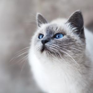 知っておきたい猫の春ストレスとは?春ストレスの原因と対策について