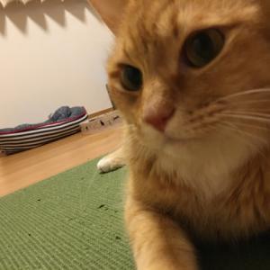 甘えん坊猫ちゃん