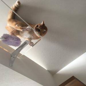ハンディクイックルと猫
