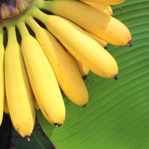 バナナの特等席