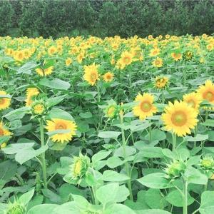 【ジャニーズ】観光メイン北海道3泊4日の遠征旅行記
