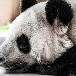 王子動物園 開園記念日は入園料無料の日