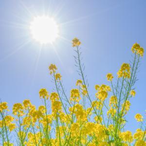 総合運動公園 菜の花