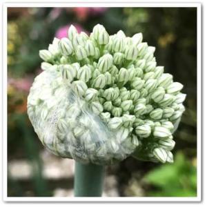 今日のお花は。。。