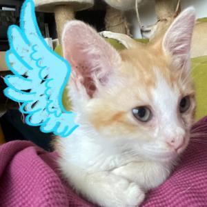 「おじさん天使」が舞い降りたってお話ヾ(*・ω・*)ノ