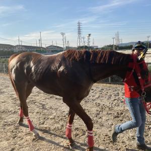 園田競馬・開催日誌 2021年7月22日 エイシンビッグボスが初の古馬戦を快勝!