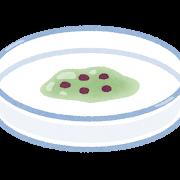 【コロナも撃退!?】培養実験してる人が食べてはいけない意外な食べ物とは?【暮らしに役立たない理科】