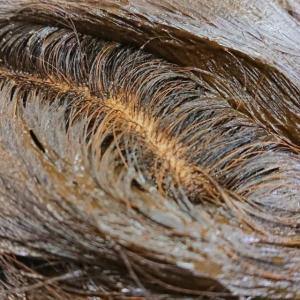 ヘナの天然パワーで女性の髪と頭皮を健やかに