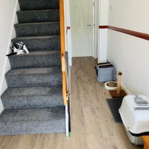 【空き家改修】廊下のビフォーアフター&猫部屋の移動♡