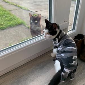 【猫ちゃんメモ】毎日Avyのお客さんが来る日々。笑