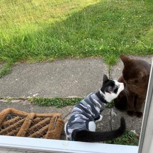 【猫ちゃんメモ】また別のゲストが来た!笑