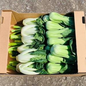 野菜のClick & Collect的なこと、始めてみます!
