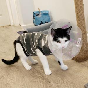 【猫ちゃんメモ】手術、無事に終わってます!!