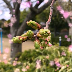 桜が咲く頃🌸🐝
