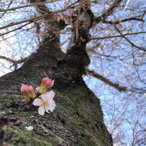 春のEペース走