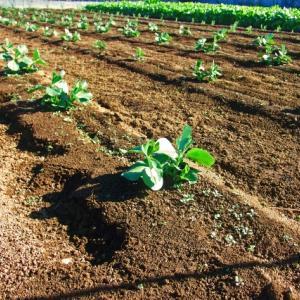 【家庭菜園】農地を耕す準備 #4