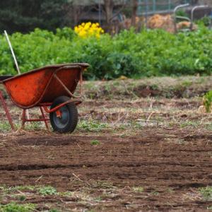 【家庭菜園】始動!農地耕作 #5