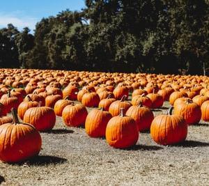 かぼちゃ1個を丸ごと買ったら。。。