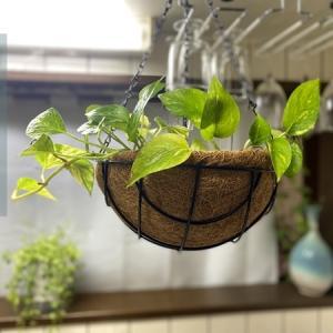 土の代わりにベラボンを使って植物の植え替え
