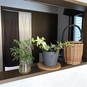植物を枯らさないための4個のポイント│「鉢」「鉢カバー」を見直してみる