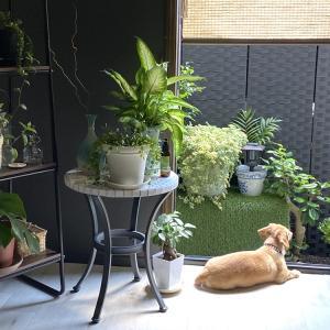 愛犬が空気を読んでお庭に出ない理由 地面のメンテナンスをする