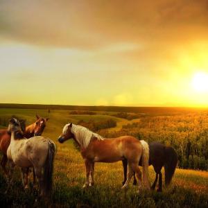【すぐに使える】Horseを使った有名な英語表現7選