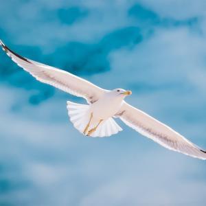 For the birdsってどんな意味? 「鳥」を使った英語表現15選!