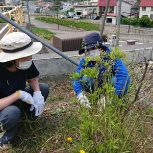 緑と向き合う~☆【北海道第16団:小樽市】