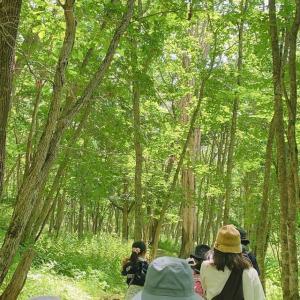森の中で感じること【北海道第9団:釧路市】
