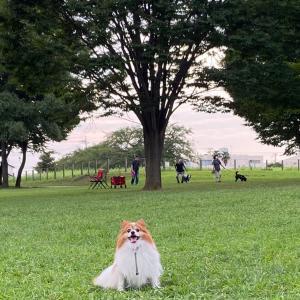 今年の夏もやっぱり来たよ♡ *〜ビン沼公園〜*