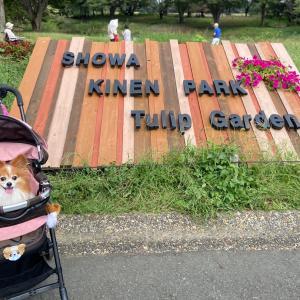昭和記念公園 *〜可愛いフォトスポット盛り沢山〜*