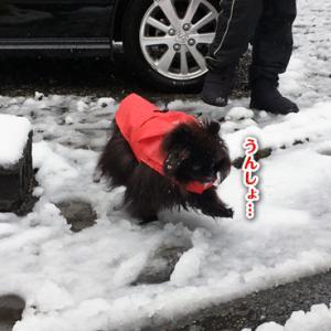 季節はずれの雪 【動画あり】
